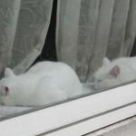 animaux-en-ville-3596