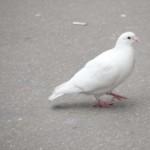 animaux-en-ville-4015
