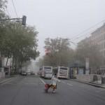 brouillard-1962