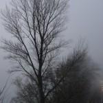cauchemar-versus-pollution-et-vice-versa-4511