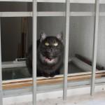 chat-noir-en-prison-2071