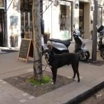 chien-noir-2695