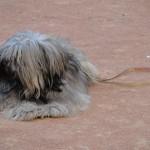 chien-pcx-65-785