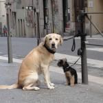 chiens-2552