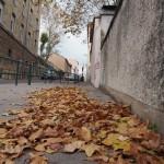 des-feuilles-au-repos-0029