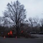 des-hommes-rouges-et-un-arbre-noir0134