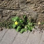 diverses fleurs urbaines