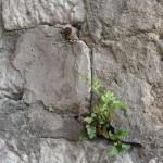 ecologie-au-coeur-de-la-pierre-4591