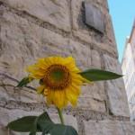 ecologie-en-ville-4127