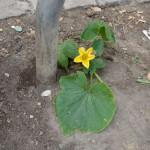 ecologie-rubaine-9922