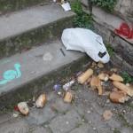 ecologie-urbaine-6174