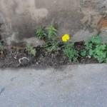 ecologie-urbaine-9027