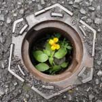 ecologie-urbaine-pcx-63-0267