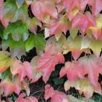 feuilles-dautomne-3840