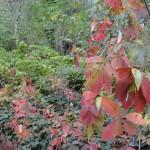 feuilles-dautomne-3932