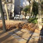 feuilles-dautomne-3988