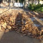 feuilles-dautomne-3989