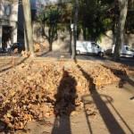 feuilles-dautomne-3991