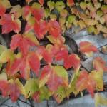 feuilles-dautomne-4022