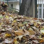 feuilles-dautomne-4070