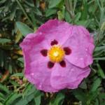 fleurs-pcx-62-9404