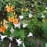 fleurs-pcx-64-708