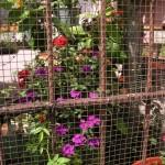 fleurs urbaines en prison