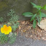fleurs-urbains-pcx-62-9817