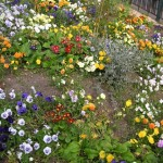 fleurs urbanisées