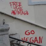 go-vegan-5156