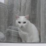 histoire-de-chat-4957