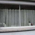 histoire-de-chats-4956