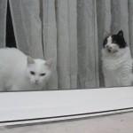 histoire-de-chats-4958