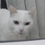 histoire-de-chats-4959