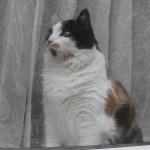 histoire-de-chats-4960