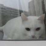 histoire-de-chats-4961