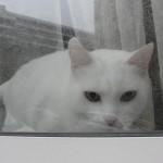 histoire-de-chats-4962