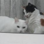 histoire-de-chats-4963