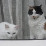 histoire-de-chats-4964