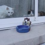 histoire-de-chats-4980