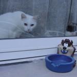 histoire-de-chats-4981