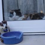 histoire-de-chats-4982