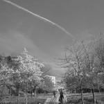 le-blanc-ce-nest-pas-noir-2914