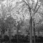 le-blanc-ce-nest-pas-noir-2916