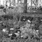 le-blanc-nest-pas-noir-2991