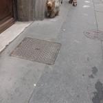 les-gens-et-leur-chien-2476