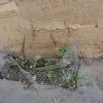 micro-jardin-ecocitoyen-pcx-57-7635