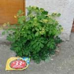 micro-jardin-naturel-mais-sponsorise-pcx-57-7654