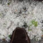 neige-de-printemps-81531