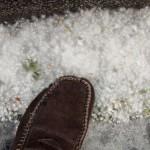 neige-de-printemps-81541